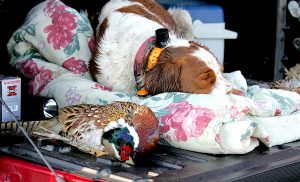 Pheasants Forever Banquet