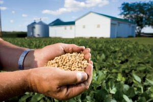 Corn/Soybeans