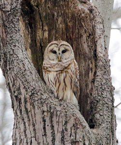 Owl expert Brenda Hente hosts talk at Ottawa Refuge